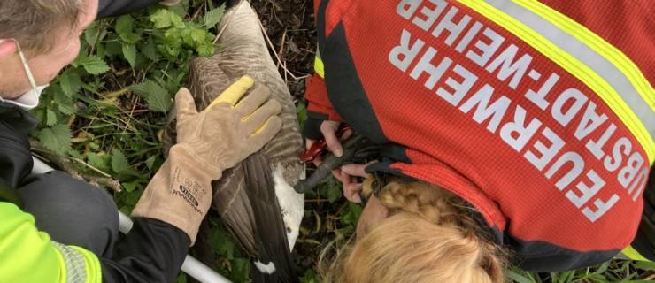 Erfolgreiche Tierrettung an einem Naturweiher in Ubstadt